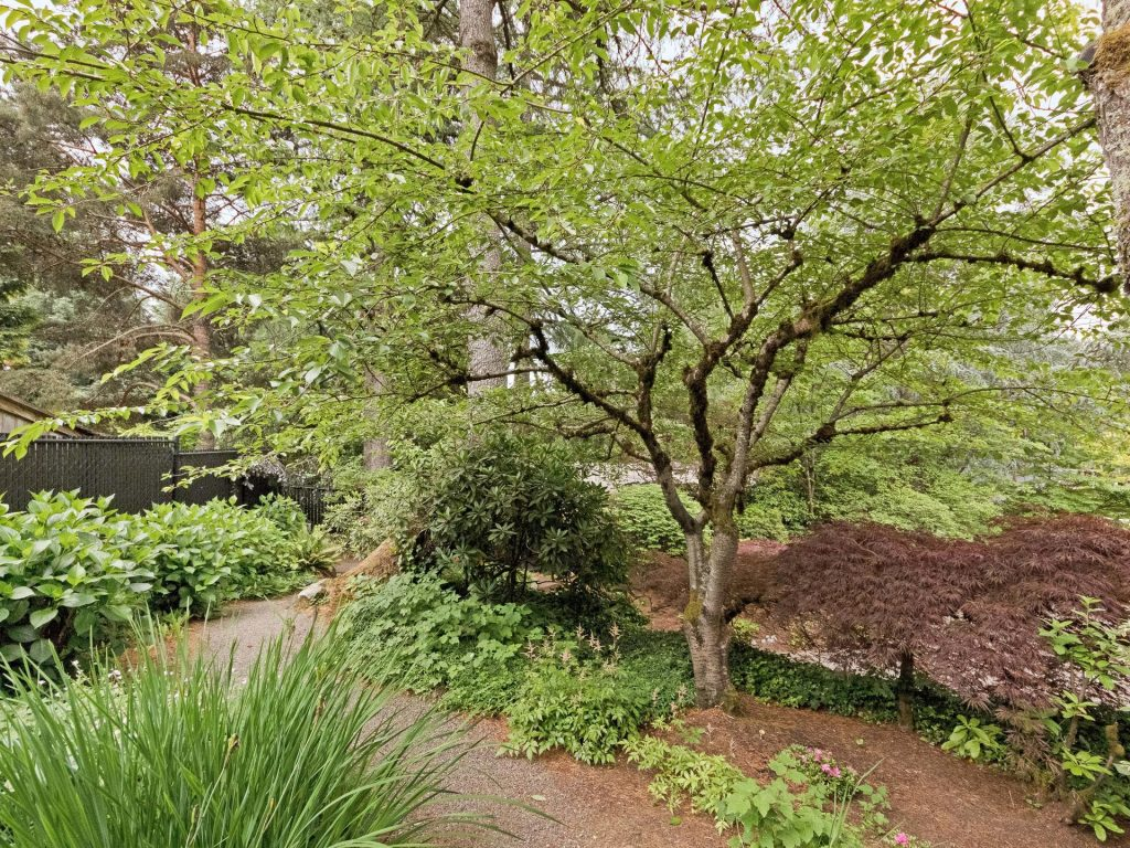 2530 SW Scenic Dr Portland OR-MLS_Size-036-29-Landscape Path-1920x1440-72dpi