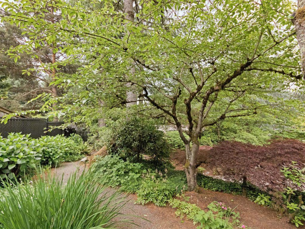 2530 SW Scenic Dr Portland OR-MLS_Size-036-29-Landscape Path-1920x1440-72dpi